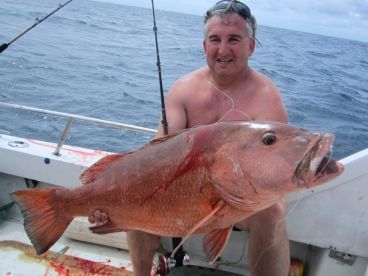 Cubera snapper, the king of the snappers!