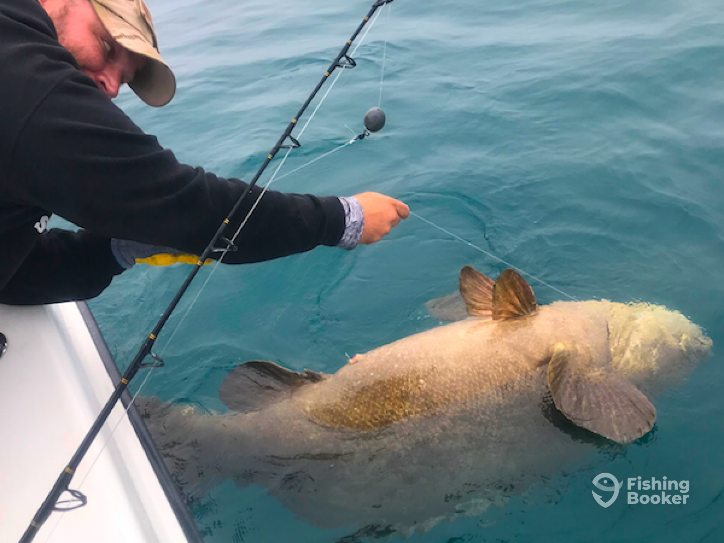 Goliath Grouper 1-1-2019