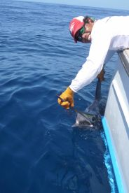 Mate Leo and sailfish