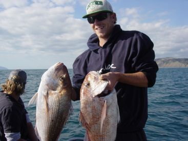 These are snapper that we get when the water is warmer summertime