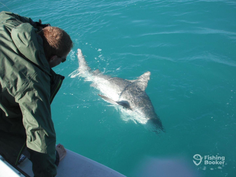 Captain Mark handling a Bull shark