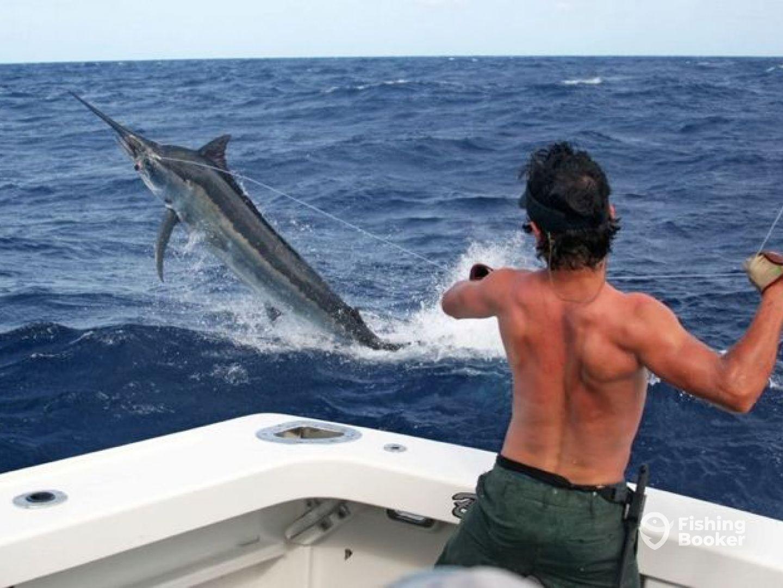 Shikari marlin charters cairns australia fishingbooker for Marlin fishing charters