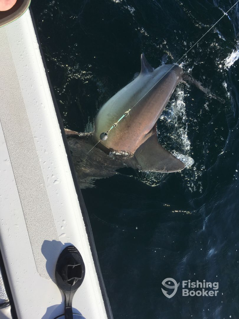 Another Bull Shark broke my pole on Just Add Water