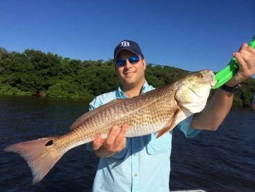 Huge Redfish caught in Tampa Bay