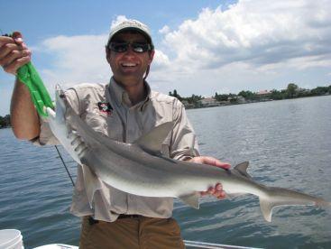 Tampa Bay shark