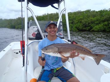 A beautiful summertime bull redfish. This fish measured over 31
