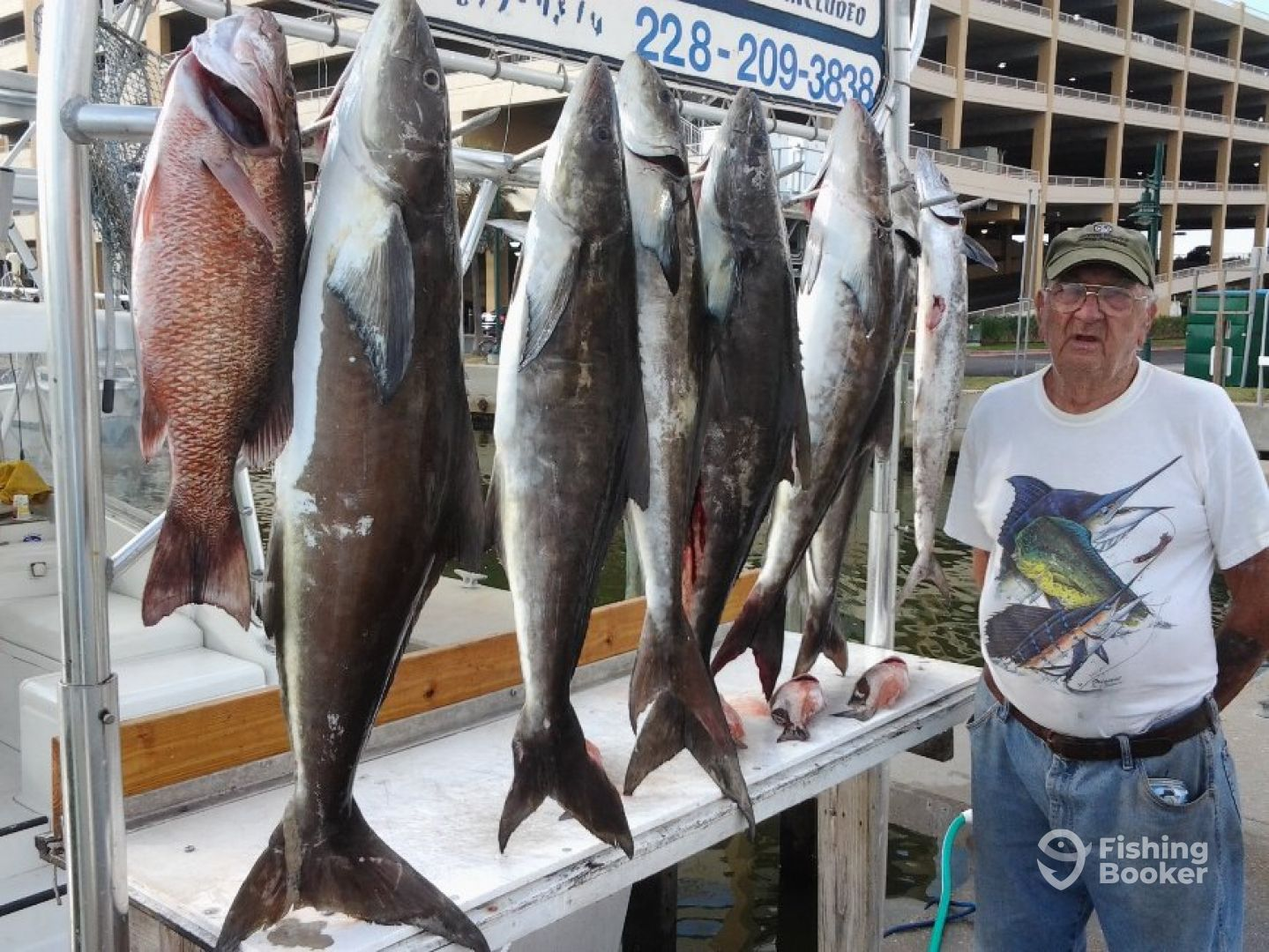 limit of cobia