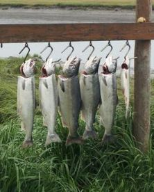 Phil's Smiling Salmon Guide Service – Alaska