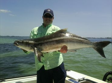 Over 60 lb cobia caught on an inshore trip. Don't feel like you need to go off shore to catch big fish!