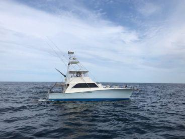 Blue Bandit Sportfishing