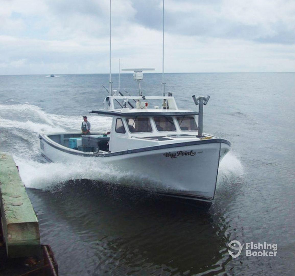 Deep-sea Fishing & Marine Adventures