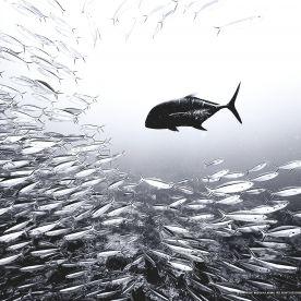 Game Fish Hunters