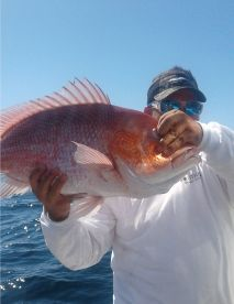 Captain Kal can find the Red Snapper