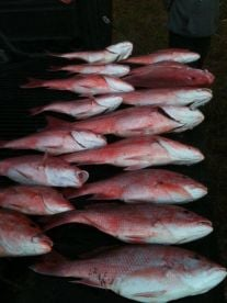 Yeah...we got Red Snapper!