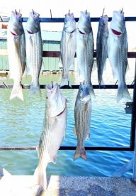Lake Whitney Striper Guide