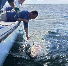 Wild Tuna Charters