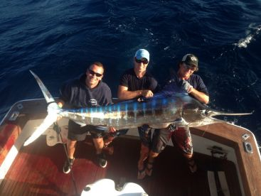 Port Stephens Striped Marlin