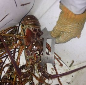 R&R Fishing Charters - Lobster Trip
