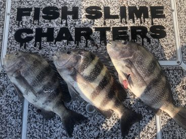 Fish Slime Charters