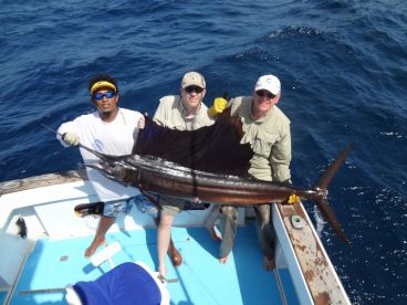 Sailfish around 120 lbs at the Gulf of Papagayo.