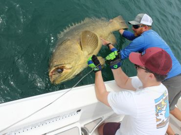 Goliath grouper test your strength!