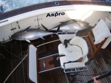 54 Kilo Tuna