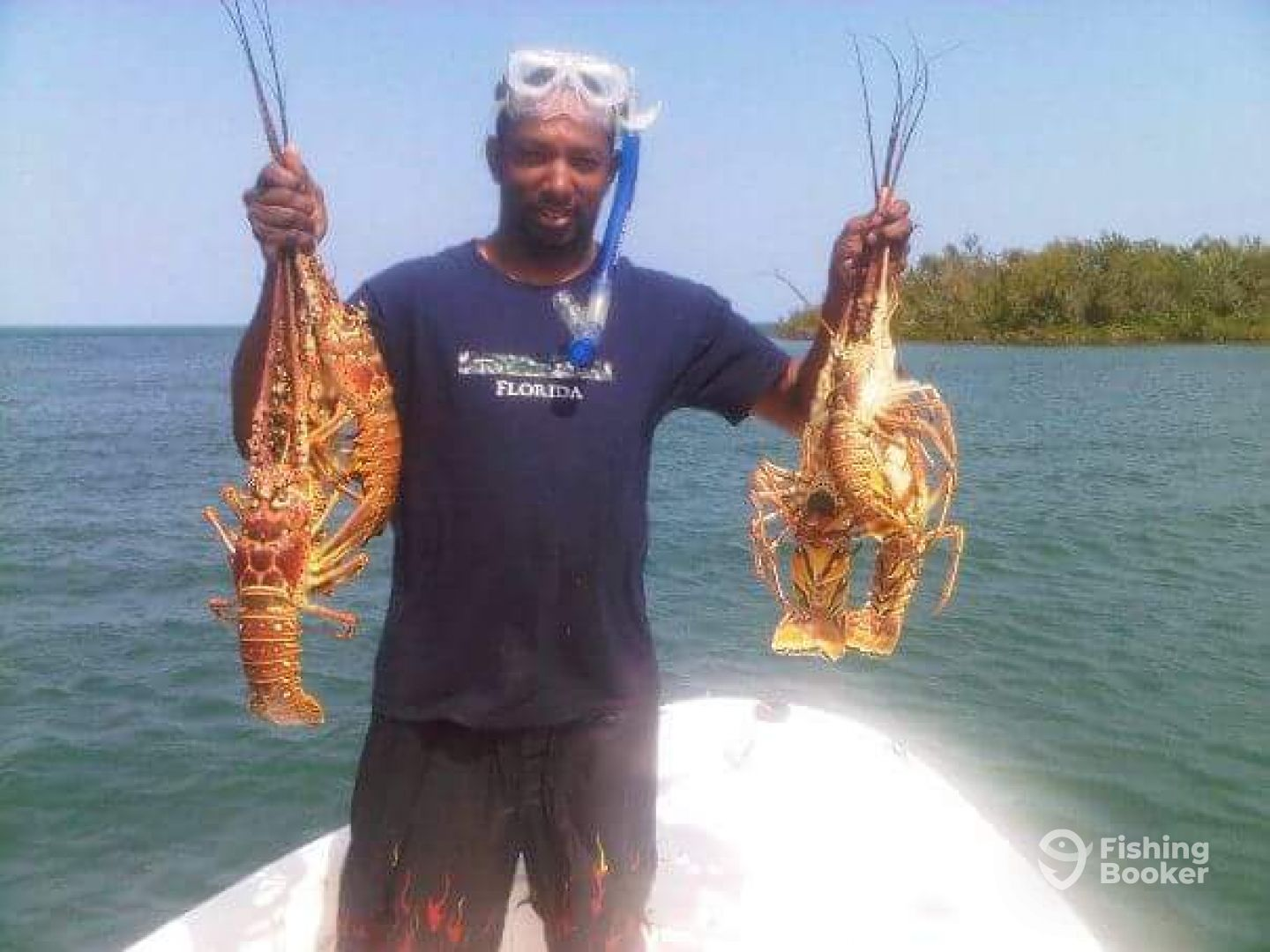 Caribbean spiny lobsters come and catch with us.