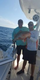 Summer time red grouper