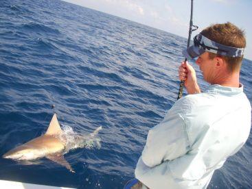 Sometimes we get a shark!!