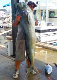 A 64 lb. Dolphin caught during a tournament in Key West, FL.!