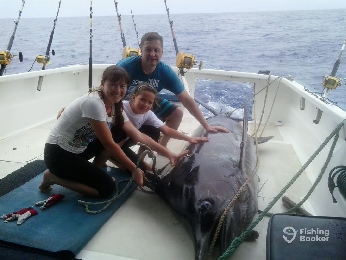 800 lbs Blue Marlin caught on a lure