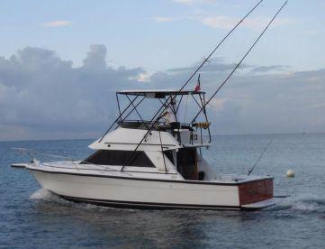 Sea Fox - Fishing Puerto Morelos, Puerto Morelos