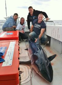 Blue Shark on board Barrel Buster