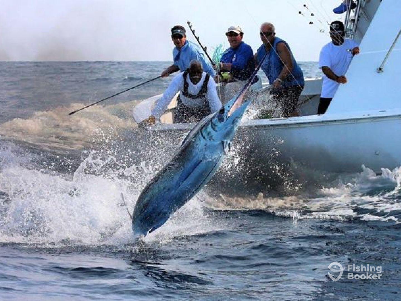 Sea Born Fishing - Fishing Tales