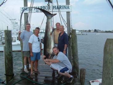 400 lb Thresher shark