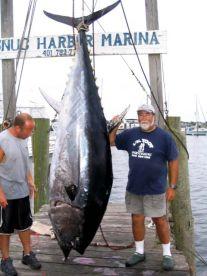 750 lb. Giant Blue Fin Tuna