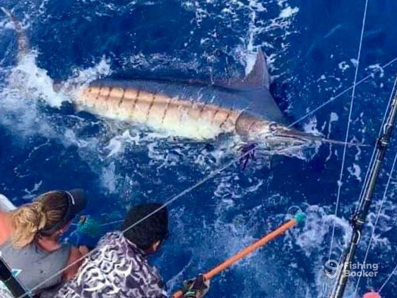 Nambas Fishing Charters