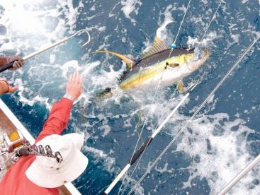 A 45KG Yellowfin Tuna caught on Nambas.