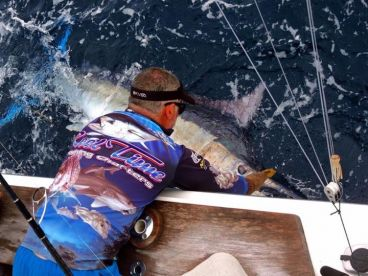 Releasing a lively Black Marlin.