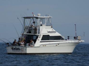 Sea Angel Charters - Mississauga