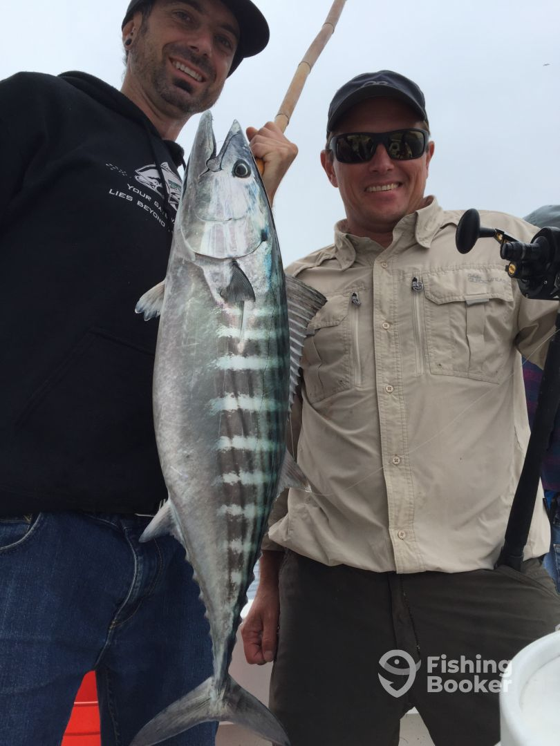 Sportfishing - Coronado Islands Bonito