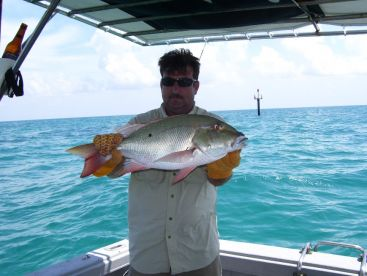 Mutton snapper. Tastes great. Less filling.