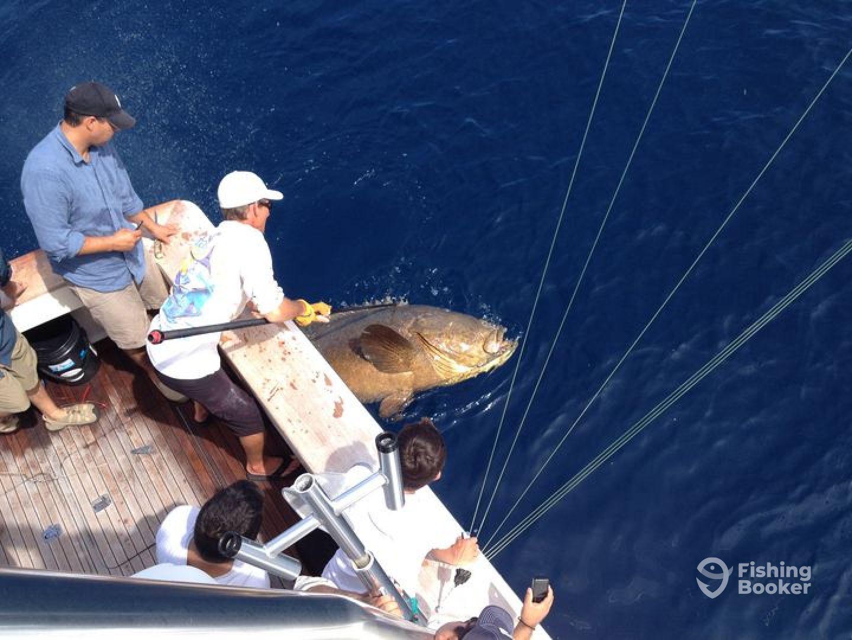 400 lb Goliath Grouper