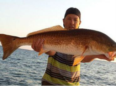 We have large numbers of Bull Reds!