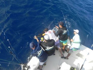 The crew taking pictures of a Blue marlin.