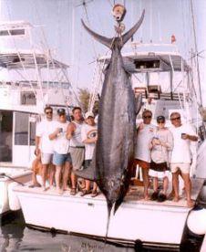 1352lbs. Bermuda Record