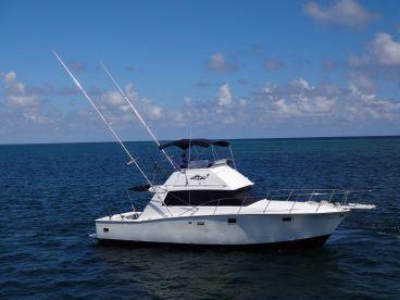 Don Quino 38' Boat