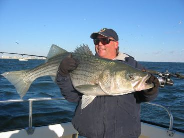 Citation Striped bass available in both Spring and Winter months