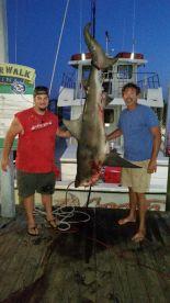 215 lb. Bull shark