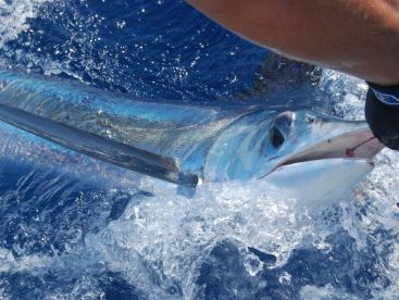 Aquasares Offshore Fishing Charters, Tavira